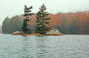 spruce-trees-Ontario