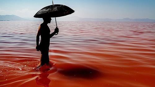 Lake Urmia in Iran turned from green to red in just a few months, as increasing salinity in the water spurred the growth or organisms producing red pigment.